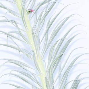 La última flor