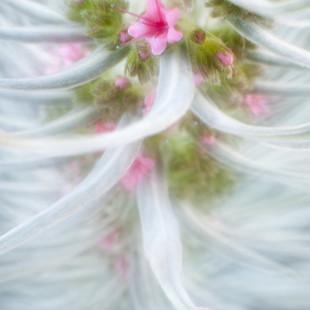 mínima flor II
